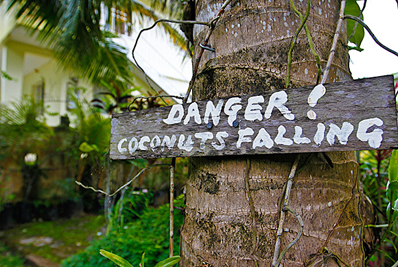 Coconuts falling
